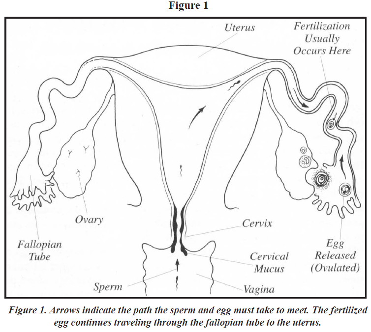 Infertility Overview Figure 1
